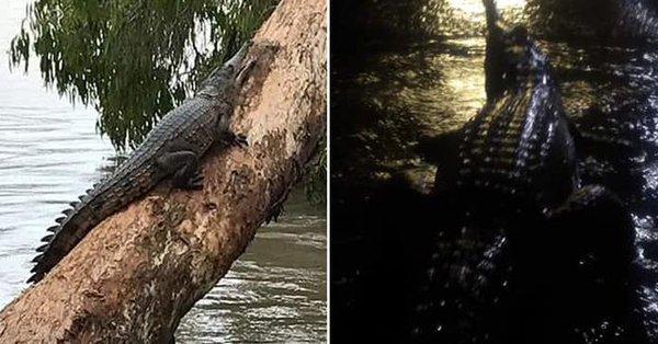Θεομηνία που συμβαίνει μια φορά στα 100 χρόνια έβγαλε κροκόδειλους στους δρόμους της Αυστραλίας (βίντεο)