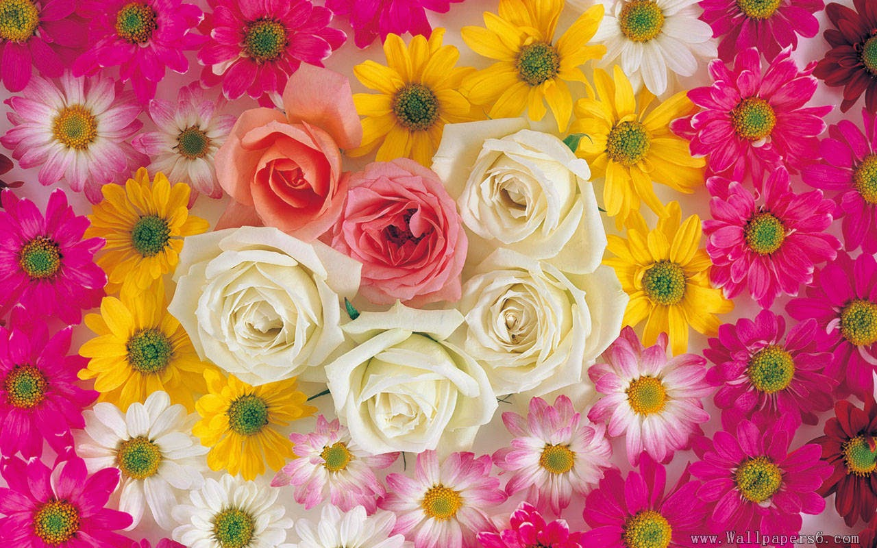 Download Free Flowers Photos: Flowers Wallpapers