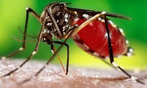Como evitar a dengue