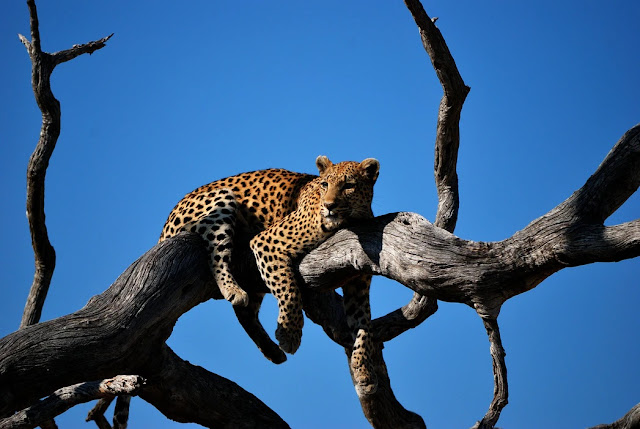 Planning Your Dream Holiday in Botswana