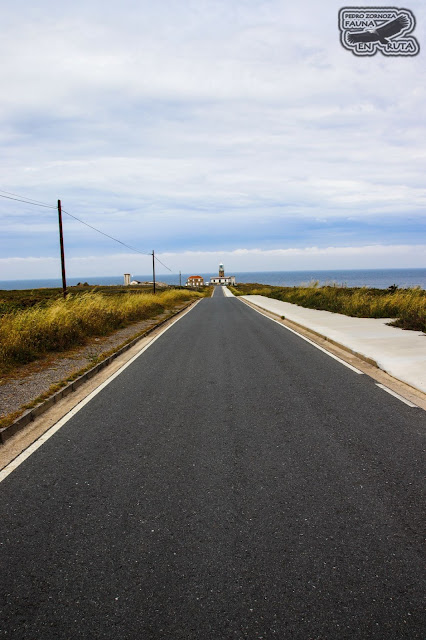 Carretera Faro Corrubedo. Fariña