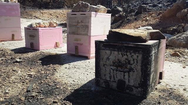 Ένα πραγματικό θαύμα της μελισσοκομίας...
