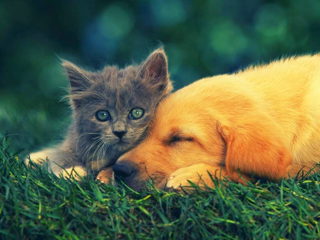 Hd Wallpapers For Desktop 1080p Cat Dog Friendship Funny Wallpaper Free Download