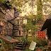 Abandoned Rat Forest Escape