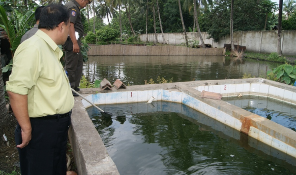 Cara Budidaya Ikan Arwana