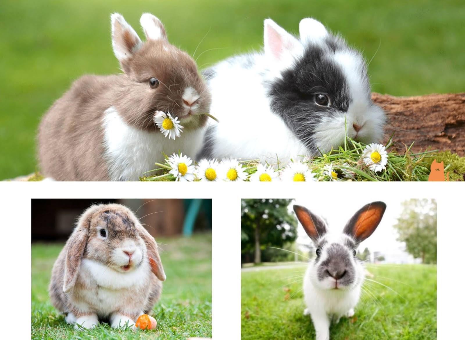 5 curiosidades sobre los conejos