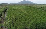 Tumis Pakis dan Udang, Olahan Makanan Hutan yang Tak Terlupakan