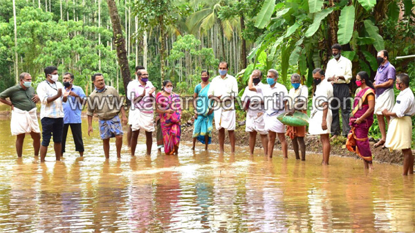 Kerala, News, Paddy, cultivation, Acres, Inauguration, President, Paddy cultivated on two and a half acres