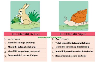 perbedaan karakteristik kelinci dan karakteristik siput www.simplenews.me