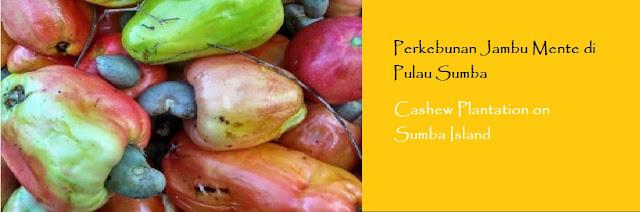 https://ketutrudi.blogspot.com/2019/01/perkebunan-jambu-mente-di-pulau-sumba.html