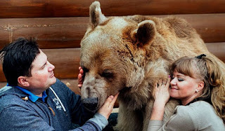This Russian Family Has a Cuddly Bear as a Pet