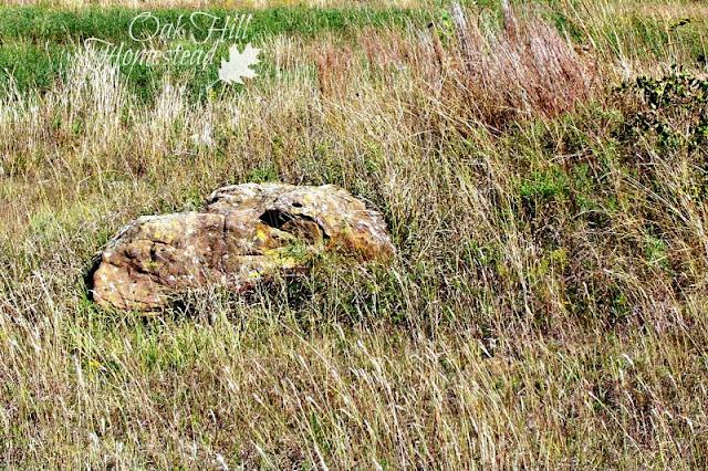 Dragon Rock