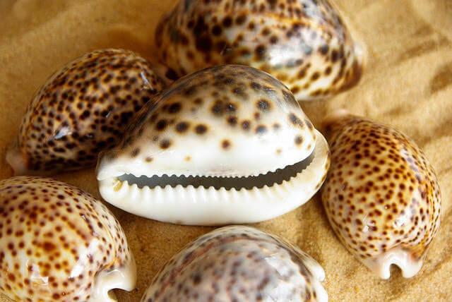 フィジーのキッズクラブで人気のアクティビティ、ビーチでの貝殻拾いの写真