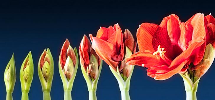 Flor de proceso