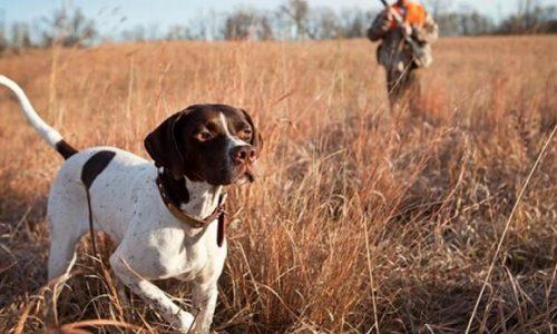 Έντονες είναι οι αντιδράσεις των κυνηγών σε ολόκληρη την χώρα για την απαγόρευση της θήρας στο διάστημα της καραντίνας.
