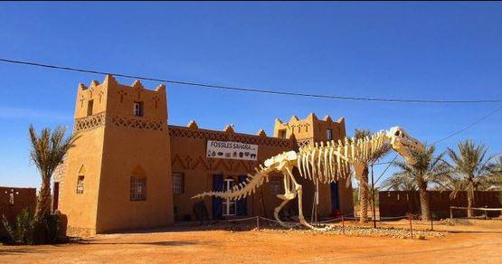 في المغرب عظام ديناصورات ب 5 اورو