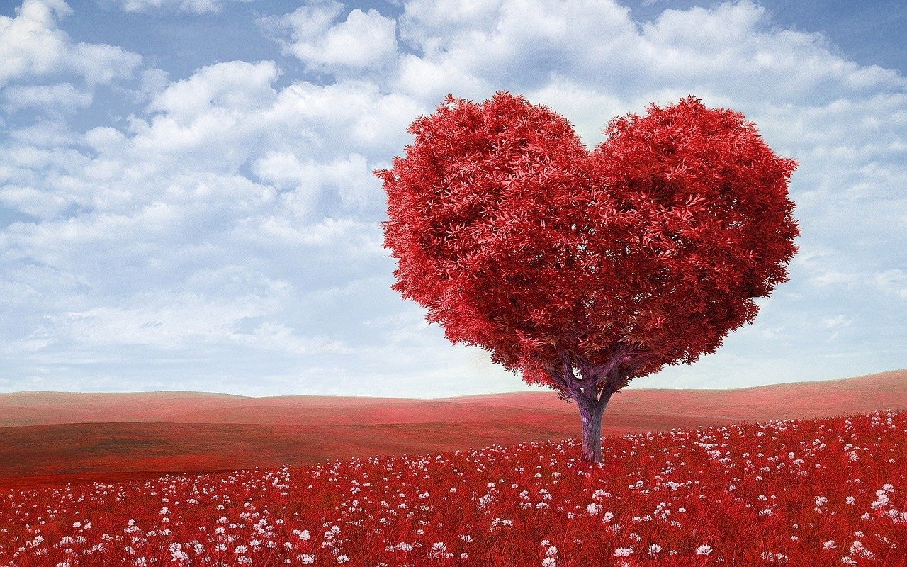 Heart-Shape Tree Red Outdoors Flowers wallpaper