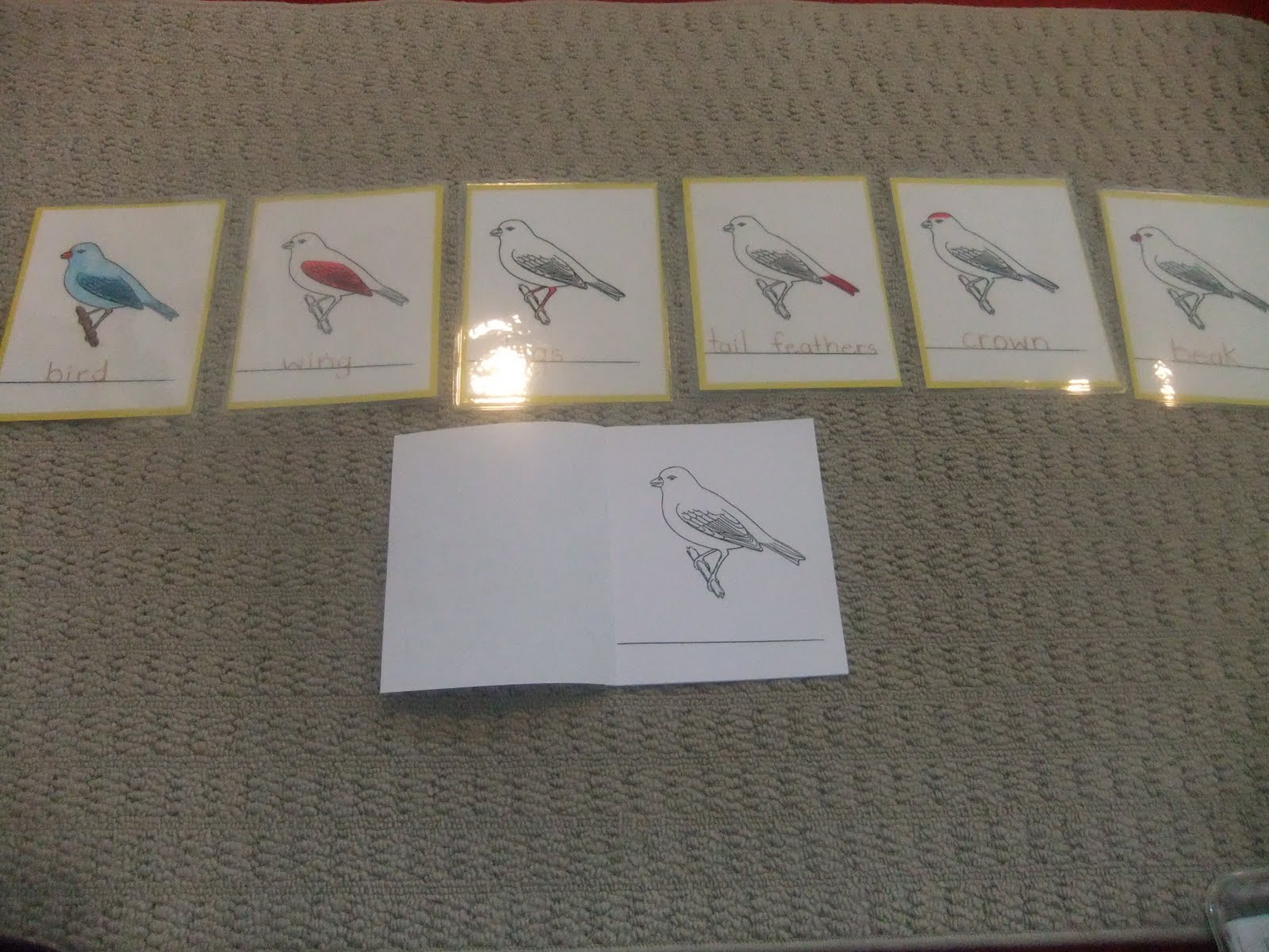 NAMC montessori preschool classroom activities learning about birds bird nomenclature