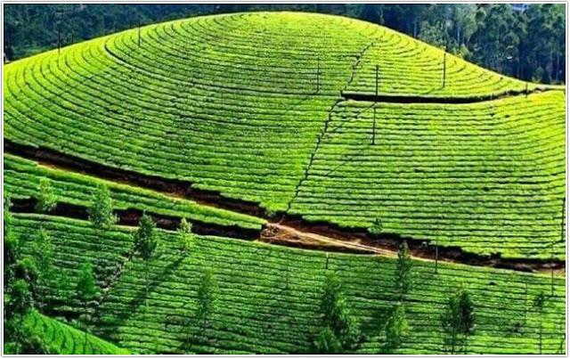 Kebun Teh Jamus;10 Top Destinasi Wisata Ngawi;