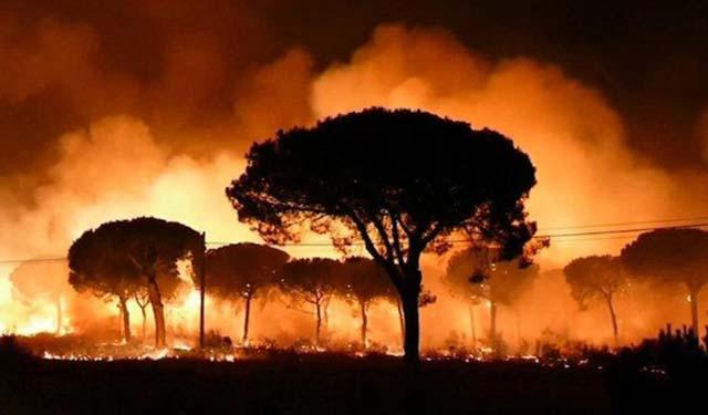 Imagen del incendio forestal declarado en Moguer, Huelva