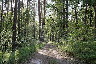 Las opodal Wierszy