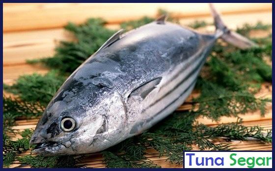 contoh ikan tuna masih segar