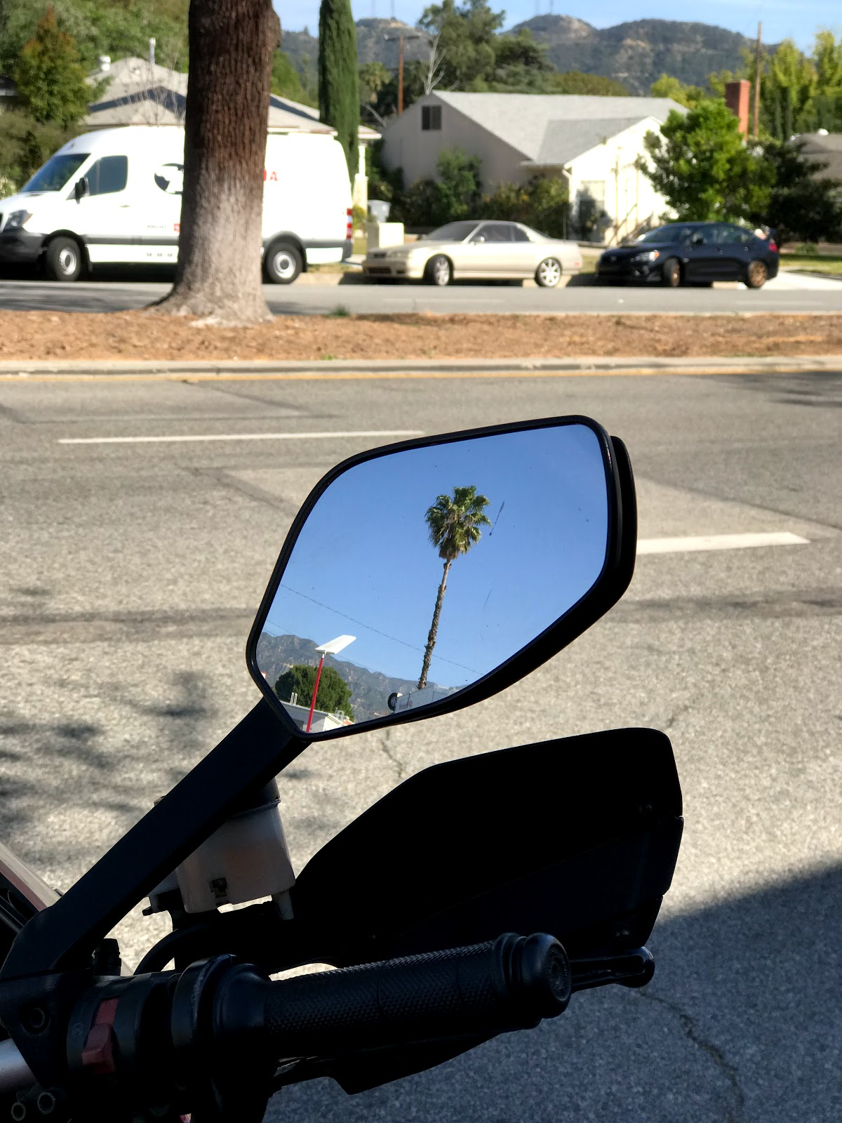 Tigh takes a picture of California palm trees outside ProItalia in Glendale