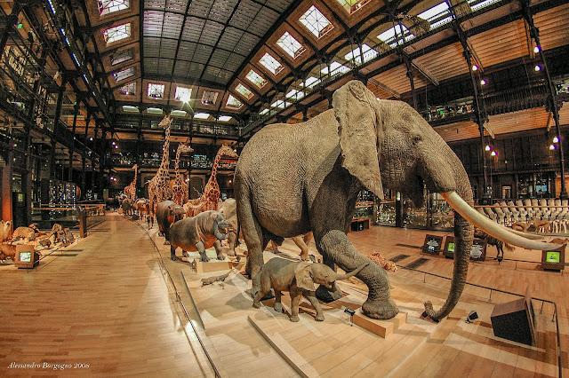 Paris - Muséum national d'Histoire naturelle - Grande Galerie de l'Évolution