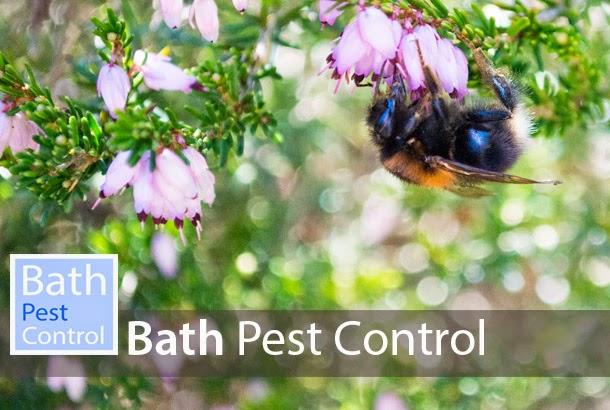 bath pest control