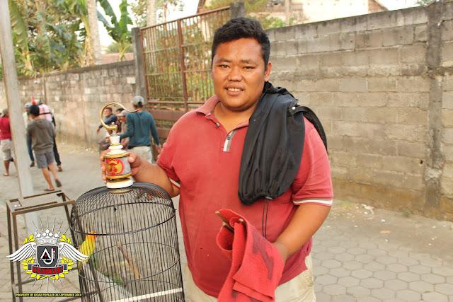 Lovebird Marlina milik H.Zainal Wajak