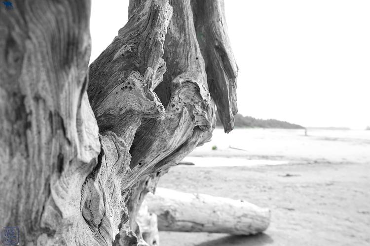 Le Chameau Bleu -  Bois flotté Long Beach Tofino Colombie Britannique Canada