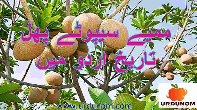 ممیے سیپوٹے پھل تاریخ اردو میں | Mamey Sapote fruit history in urdu