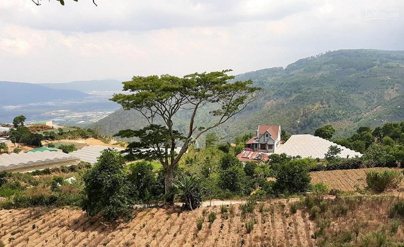 Có nên mua đất homestay tại Đà Lạt?