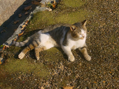 大阪府枚方市・山田池公園 くつろぐ猫