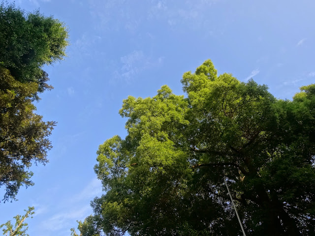 森林,氷川神社,東中野〈著作権フリー無料画像〉Free Stock Photos