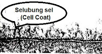Selubung Sel (Cell Coat)