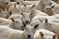 Αποτέλεσμα εικόνας για εντομοαπωθητικών σε παραγωγικά ζώα