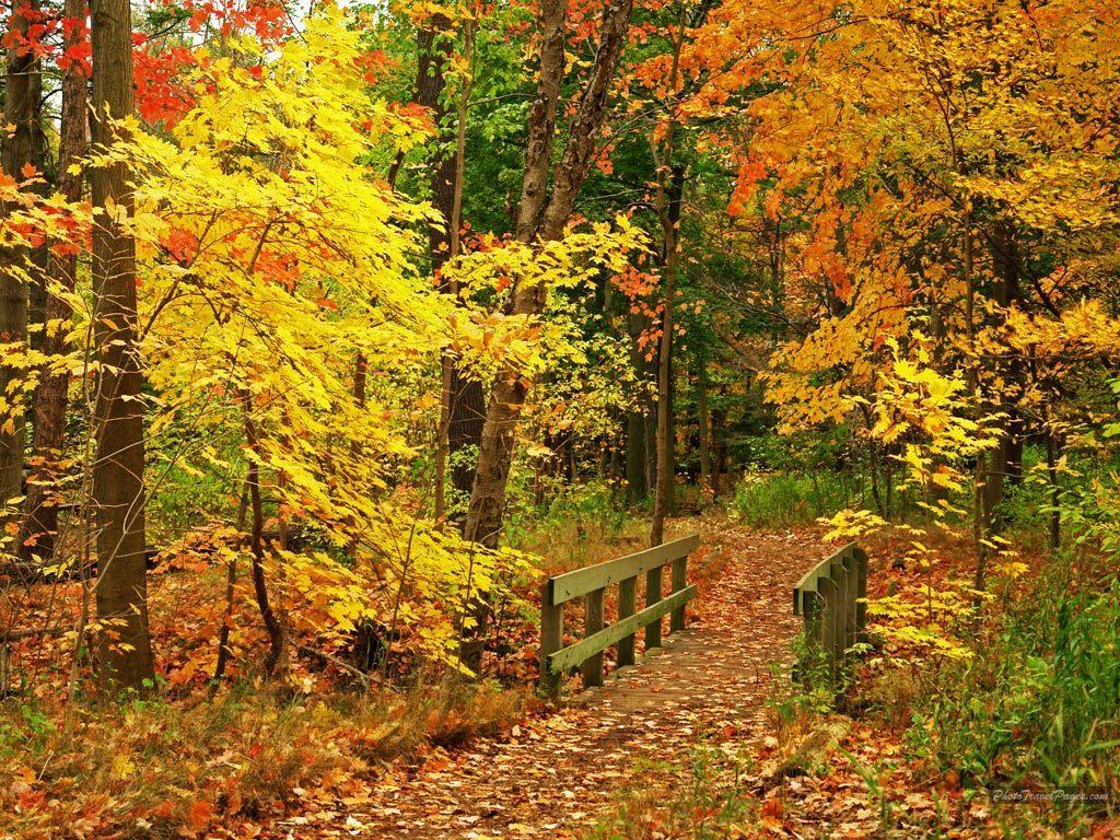 Free Wallpaper: Beautiful Autumn Season Wallpapers HD