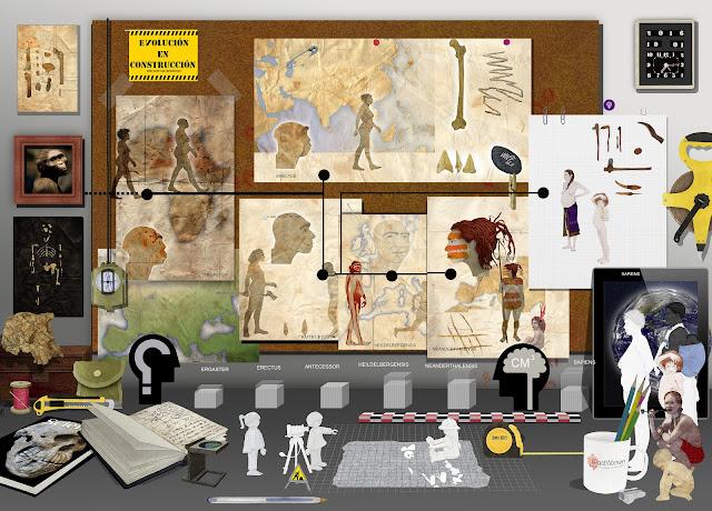 Australopithecus afarensis,Ergaster, Erectus, Antecessor, Heildelbergensis, Neandethalensis , Sapiens