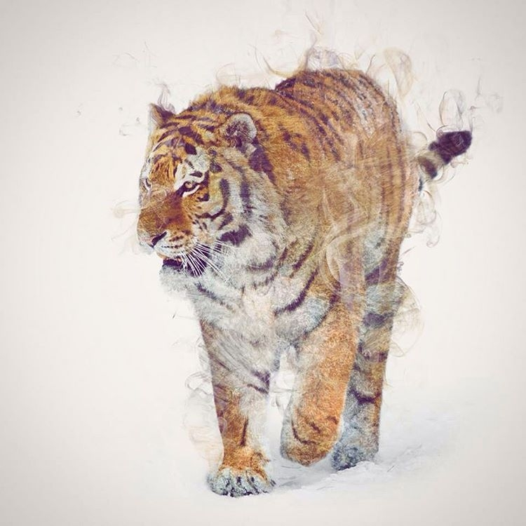 11-Tiger-Daniel-Taylor-Ghostly-Animals-in-Manipulated-Photographs-www-designstack-co