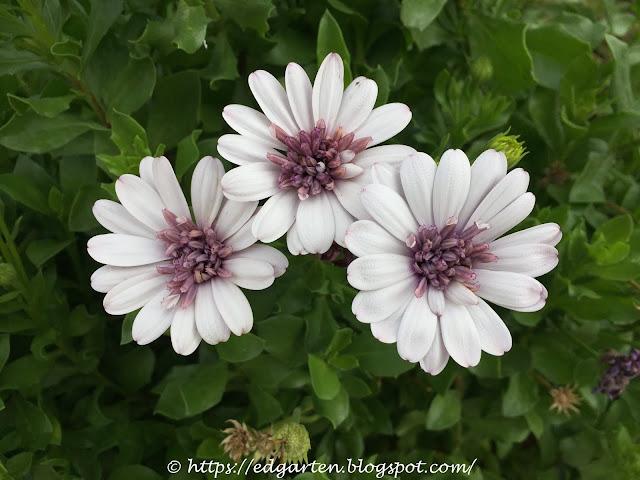 Blühende Pflanzen