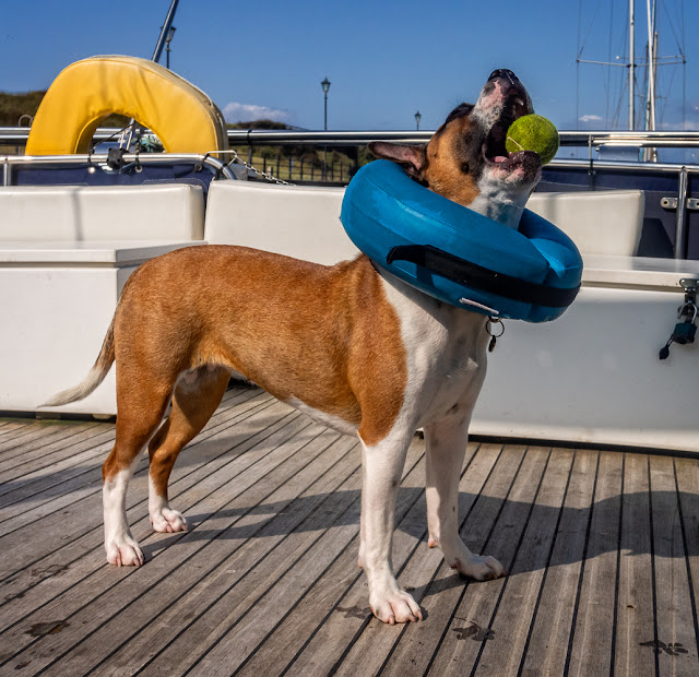 Photo of Ruby playing with a ball on Ravensdale's aft deck
