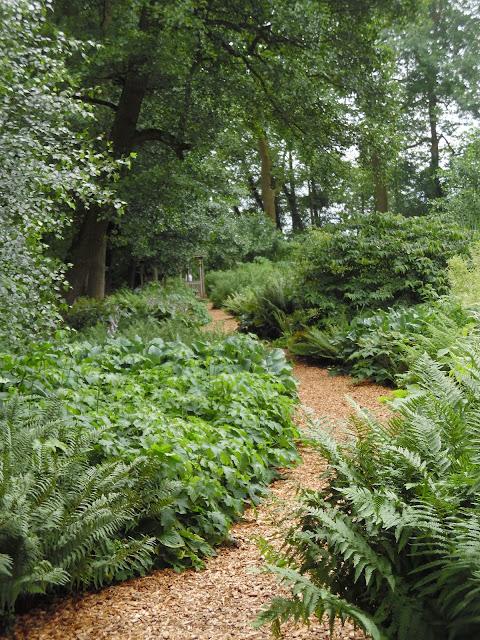 ogród leśny, ścieżka w ogrodzie