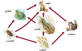 الشبكة الغذائية