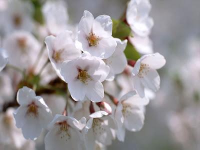Blooming Flover allfeshwallpaper