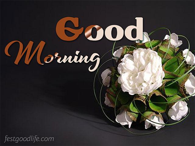 white rose good morning images love rose good morning images