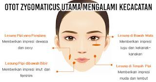 lesung pipit bisa terjadi karena otot yang disebut otot zygomaticus utama mengalami kecacatan