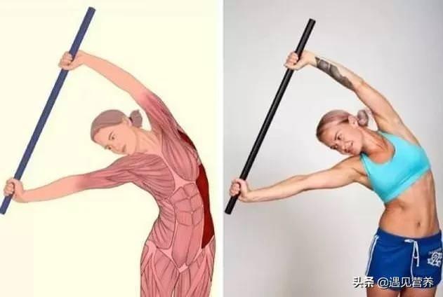 你知道拉筋主要是拉哪裡嗎?「全身拉筋圖」讓你一目瞭然,更能預防運動後的肌肉損傷!