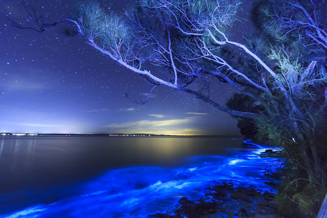 pantai bersinar di Bioluminescent Bay di Viewques puerto rico