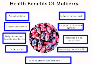 Medicinal benefits of Mulberry Tree